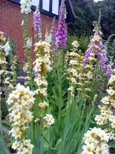 Your Garden Needs