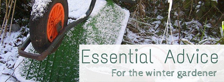 Essential Advice for the winter gardener