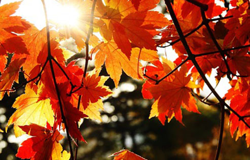 autumn-leaves-781380_640