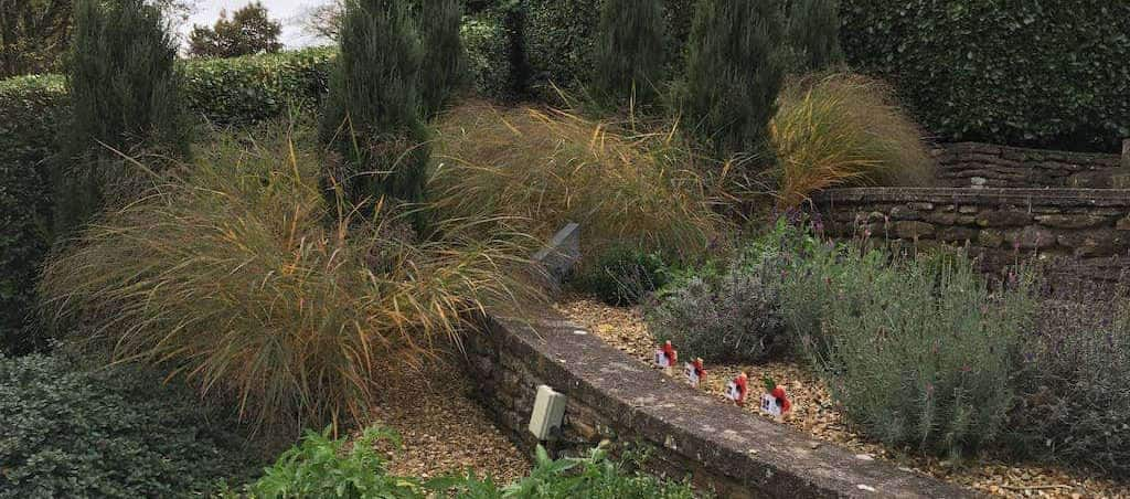 Garden Plants & Shrubbery