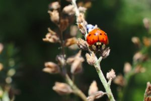 Ladybird on plant