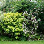 Garden shrub border